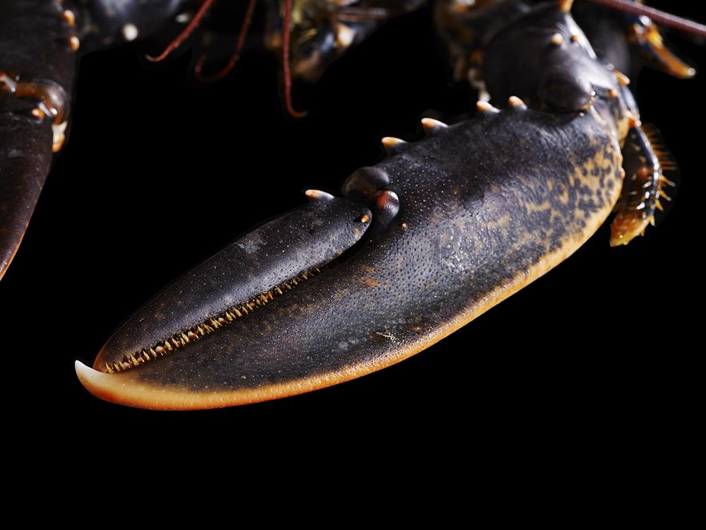 Lobster-10
